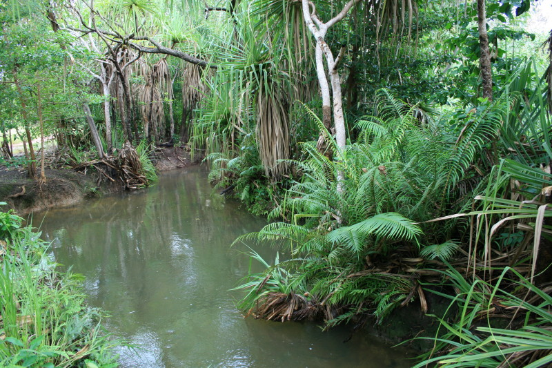 creek with water, pandanus, and other plants