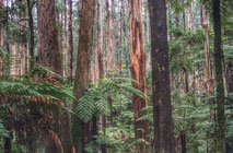 We will protect Victoria's trees, clean water and endangered animals.