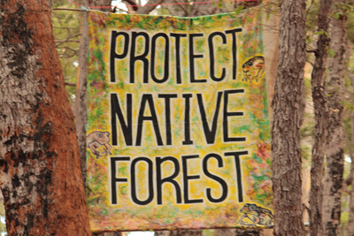 Save Native Forests