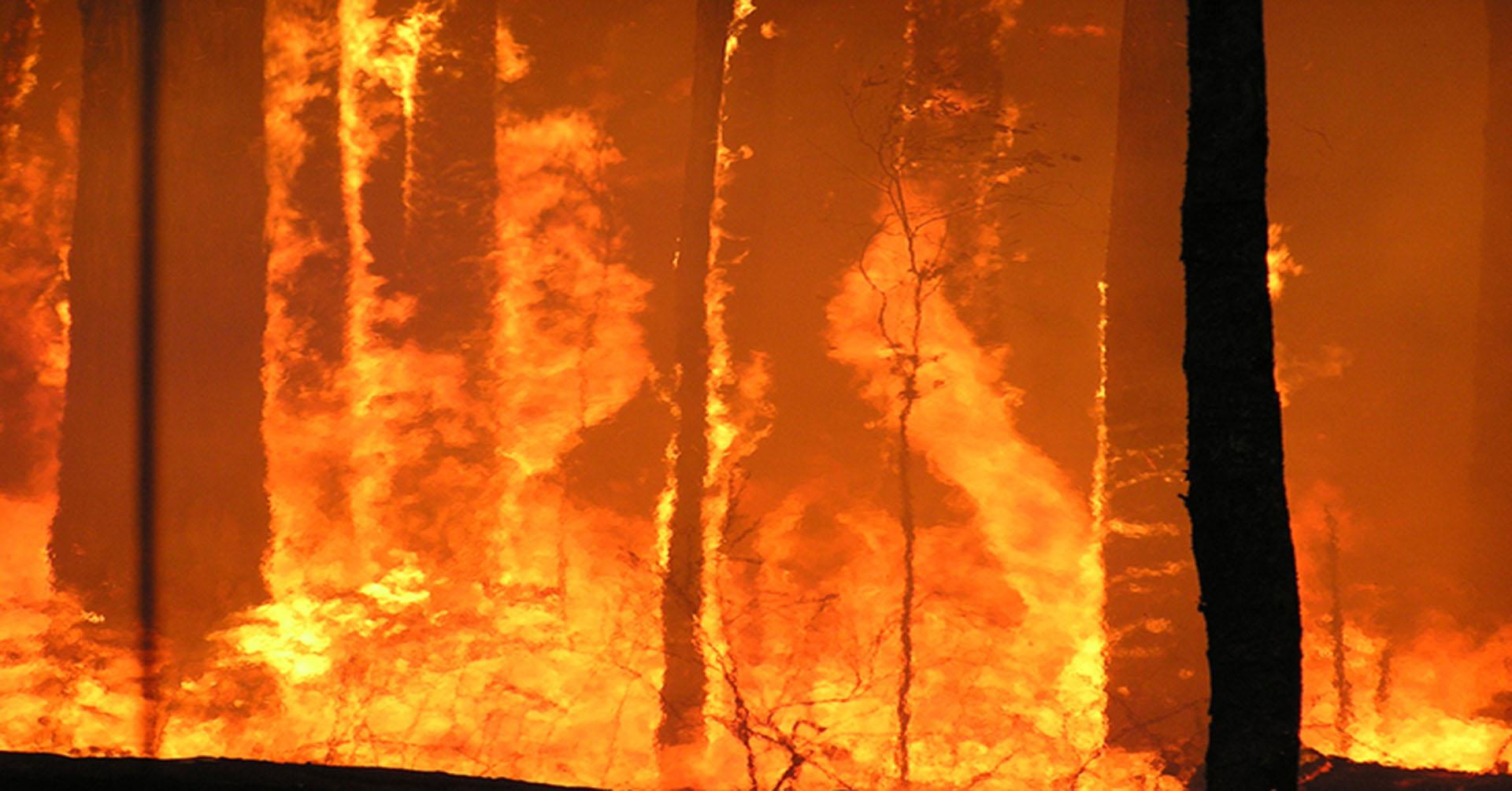 bushfire - photo #36