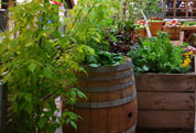 Kitchen Gardens in Schools