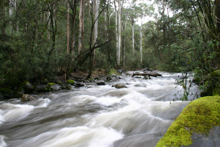 Rubicon River flowing through green mossy rocks and forest. Image by Tamas, Creative Commons https://flic.kr/p/31oFuR