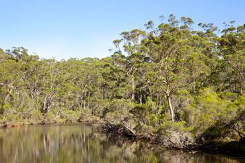 Australian bush land