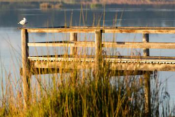 Beelair Wetlands