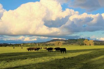 Precious farmland