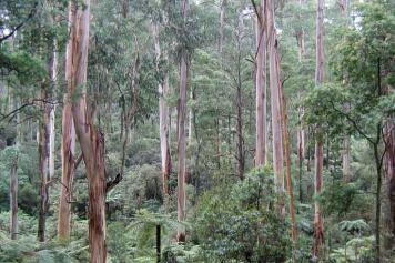 Victorian forest