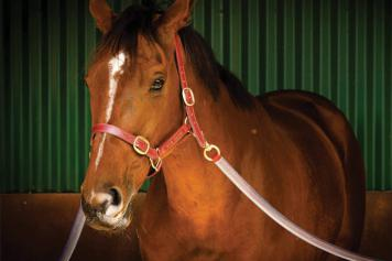 It's time to ban jumps racing in Victoria