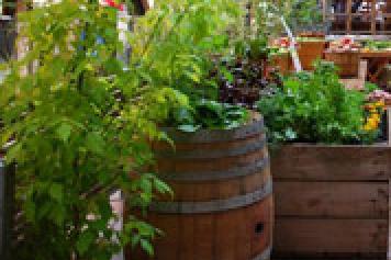 Kitchen Gardens in Schools
