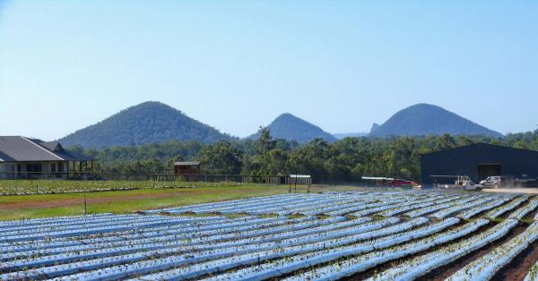 A farm in Caboolture, Queensland.