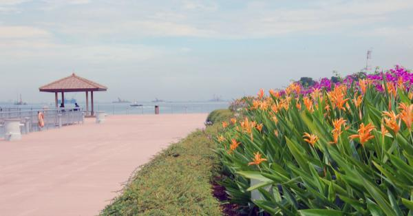 Flowers on Keppel Bay.