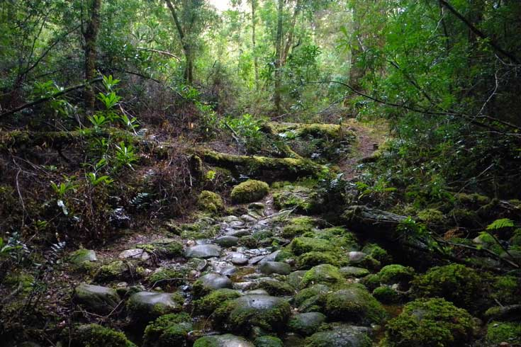 Tarkine creek